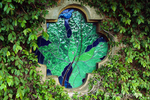 Grape leaf stained glass window surrounded by vines growing on a stone building at Stags Leap Winery.