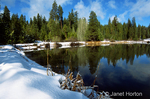 Coniferous trees beside of and reflecting into Snowshoe Pond, with snow-covered banks and fallen-over cattails in the foreground, in the Sierra Nevada mountains