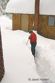 Snow falling on man shoveling pathway to shed in deep snow which is in the Sierra Nevada mountains