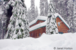Snow falling on house covered with deep snow after major snowstorm, in heavily forested yards in Sierra Nevada Mountains