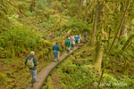 Group of people hiking on a wood platform path in rainforest in a remote area
