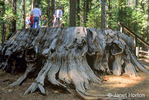 """Park Ranger giving talk to tourists standing on the """"Discovery Tree"""", a large Giant Sequoia tree stump in Calaveras Big Trees State Park."""