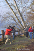 Photographer using a monopod to photograph Bald Eagles along the Skagit River area near Rockport, WA.  Senior citizens and other people using birding scopes to watch the Bald Eagles.