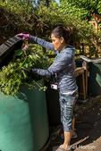 Bellevue, Washington, USA.  Female Master Gardener adding plants to a compost bin.