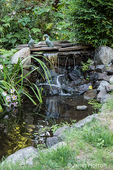 Small waterfalls into a pond that is a water feature in a yard.  The pink flowers are Japanese Anemone or Japanese Thimbleflower or Japanese Windflower.