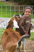 Bellevue, Washington, USA.  Nubian Goat (Reeba) sniffing young African American girl.  Concepts: mischievous, playfulnous; curiousity; farm humor