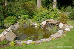 Pond with various water plants and a waterfall flowing into it, in a forested backyard, landscaped to attract birds