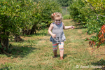 Twenty month old Lily exploring a U-Pick Blueberry Farm