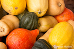 A variety of winter squash, including Acorn, Butternut, Kuri and Spagetti or Vegetable Squash.