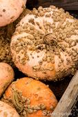 Galeux D'Eysines or Peanut pumpkins.