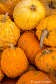 Pile of orange warty pumpkins for sale.