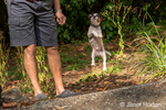 """Man playing with his two month old Jack Russell Terrier """"Harry"""" in the natural landscaping of a Pacific Northwest yard."""