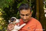 """Man holding his two month old Jack Russell Terrier """"Harry"""" who is trying to give him a """"kiss""""."""