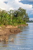 Eroded riverbank of the Maranon river, an Amazon river tributary.