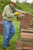 Man using his bee blower on the western super to get the bees to leave that part of the hive which he is going to be harvesting.  His company is