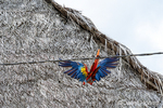 Scarlet Macaw doing acrobatics on a wire beside some thatched roof homes.