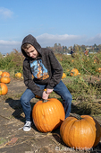 Everett, Washington, USA.  Teenage boy showing his strength lifting a big pumpkin at a pumpkin patch.