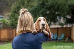 "Renton, Washington, USA.  Woman holding her five month old Basset Hound puppy ""Elvis"" over her shoulder."
