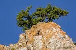 Bozeman, Montana, USA.  Rocky cliffs with Pincushion Orange lichen