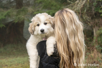 Issaquah, Washington, USA.  Woman holding her ten week old Great Pyrenees puppy.  (PR)