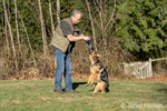 "Issaquah, Washington, USA.  Man teaching his four month old German Shepherd puppy ""Lander"" to jump up to get his toy."