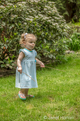 Issaquah, Washington, USA.  18 month old girl having fun with sticks while exploring a backyard.