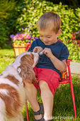Issaquah, Washington, USA.  Three year old boy sitting in a lawn chair holding bird feathers, teasing a Cavalier King Charles Spaniel.