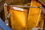 Frames of honey in a honey extractor machine. As the frames of honey spin, centrifugal force throws the honey against the side walls of the extractor where it will run down and collect at the bottom of the extractor.