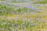 Mima Mounds Natural Area Preserve near Olympia, Washington, USA.