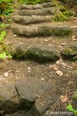 Makah Indian Reservation near Neah Bay, Washington, USA.  Stone pathway on Cape Flattery trail.