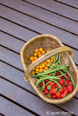 Basket of freshly picked ererbearing strawberries, Monto Cristo pole green beans and Sungold cherry tomatoes resting on a wooden deck in Issaquah, Washington, USA