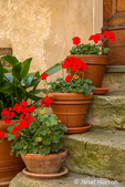 Pienza, Tuscany, Italy.  Potted geraniums line the steps to a home.    (For Editorial Use Only)