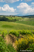 Montalcino, Tuscany, Italy. Tuscan countryside beside the Altesino Winery in the Val d'Orcia region. (For Editorial Use Only)
