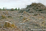 Clear-cut logging and piles of logging debris
