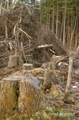 Clear-cut logging and piles of logging debris.