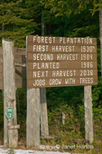 Forest replantation sign