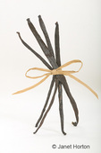 Four vanilla beans tied with wraphia with a bow standing up