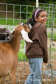Nubian Goat (Reeba) sniffing young African American girl at a small urban farm