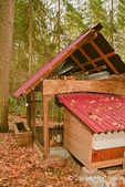 Hand built chicken coop in a neighbor's wooded backyard