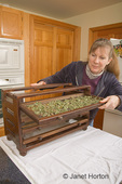 Woman, Kath, pulling out a shelf of dried oregano on an air drying food dehydrator in the kitchen