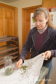 Woman, Kath, gathering the bits of dried oregano from a white cloth to put in a storage jar in the kitchen