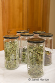Jars of home-dried peppermint and oregano in the kitchen