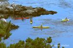 Four kayakers paddling in ocean cove