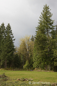 Meadow with evergreen trees with approaching storm