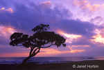 Leaning tree and beach at sunrise at Lydgate Beach Park