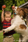 Two year old boy, Joshua, trying to protect his balls from Mandy, a Cavalier King Charles Spaniel dog who is leaping up to try to grab one.