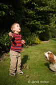 Two year old boy, Joshua, and Mandy, a Cavalier King Charles Spaniel dog, looking up at a ball that Joshua thru up in the air