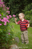 Two year old boy, Joshua, examining flower blossoms in the backyard