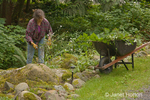 Woman pulling weeds in a shady area of her yard