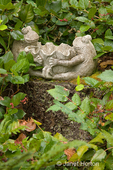 Frog statue resting on a stump in a shade garden of Salal and Oregon Grape
